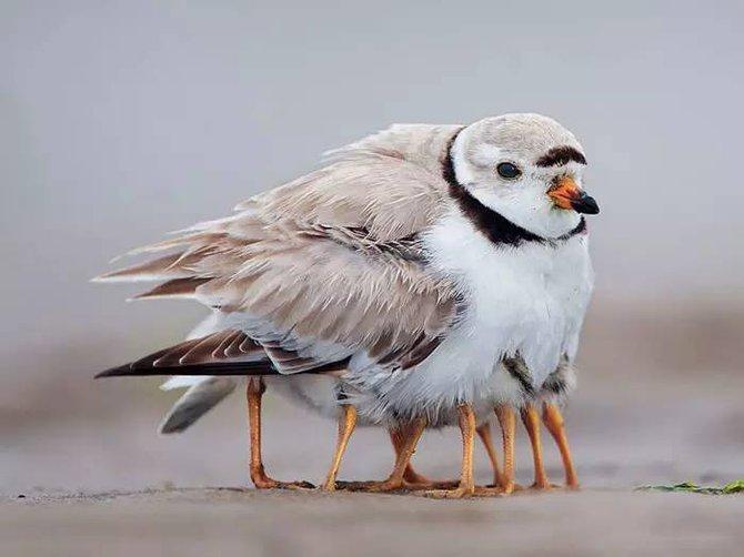 鸟妈妈如何照顾小宝 - ql91496175488 - 叶飘零