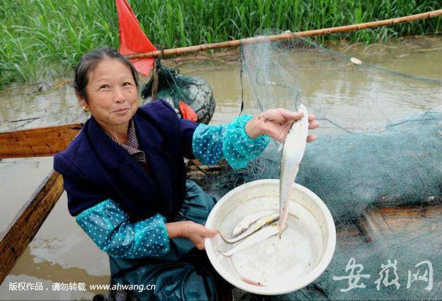 这种鱼1斤3000元 明年或永久禁捕