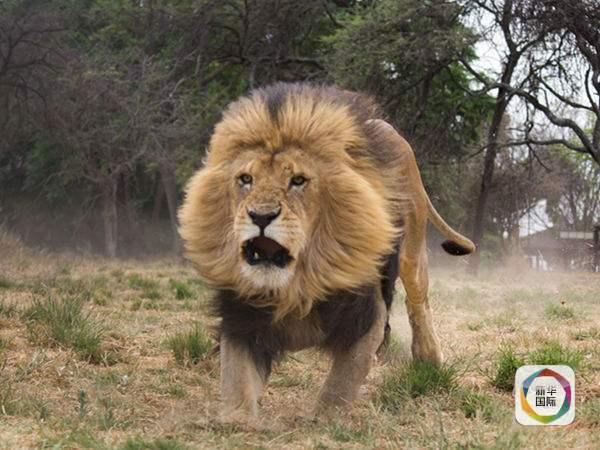 保护非洲野生动物 中国在行动