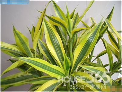 臥室適合放什么植物 8款臥室綠植為你推薦