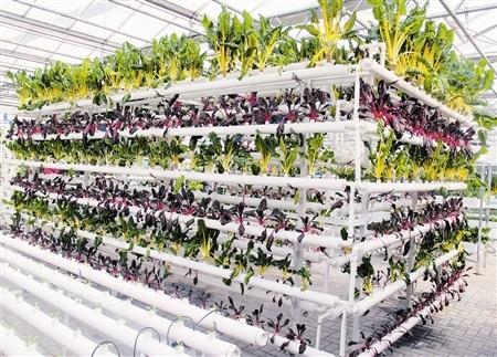 天津市多举措加快发展现代都市型农业